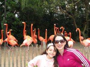 Os flamingos nos dando as boas vindas